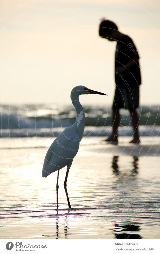 Human being Nature Water Beautiful Summer Vacation & Travel Ocean Beach Calm Animal Boy (child) Friendship Bird Horizon Going Masculine