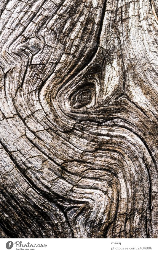 Elephant eye? Knothole Wood grain Crack & Rip & Tear Old Exceptional Dark Elegant Creepy Broken Natural Gloomy Brown Sadness Grief Pain Disappointment