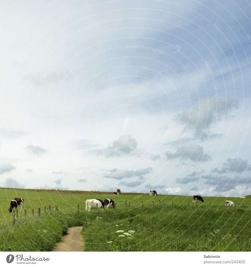 Sky Nature Blue Green White Summer Clouds Black Meadow Nutrition Environment Landscape Grass Lanes & trails Pasture Farm
