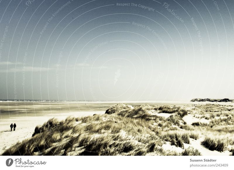 //700// Spiekeroog | long way Couple 2 Human being Landscape Beautiful weather Bushes Hill Waves Coast Beach North Sea Ocean Island Desert Walking