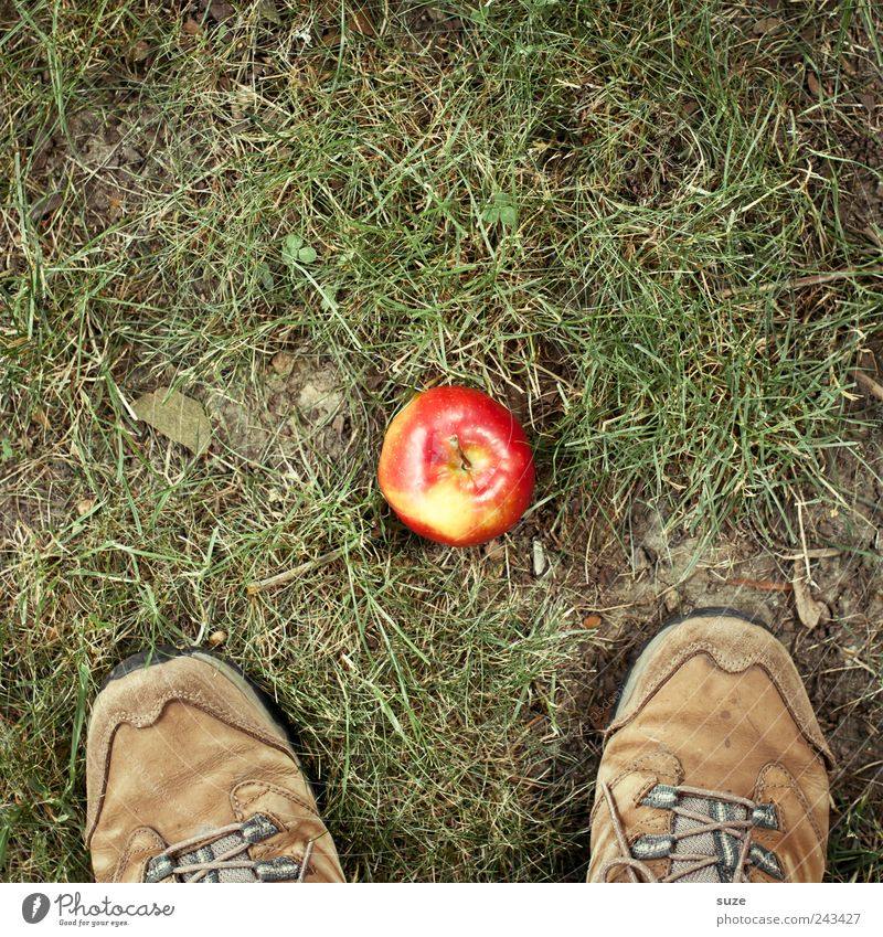 Recently in Paradise Food Apple Nutrition Picnic Organic produce Feet Environment Nature Grass Garden Meadow Green Patch of colour Hiking Footwear Hiking boots