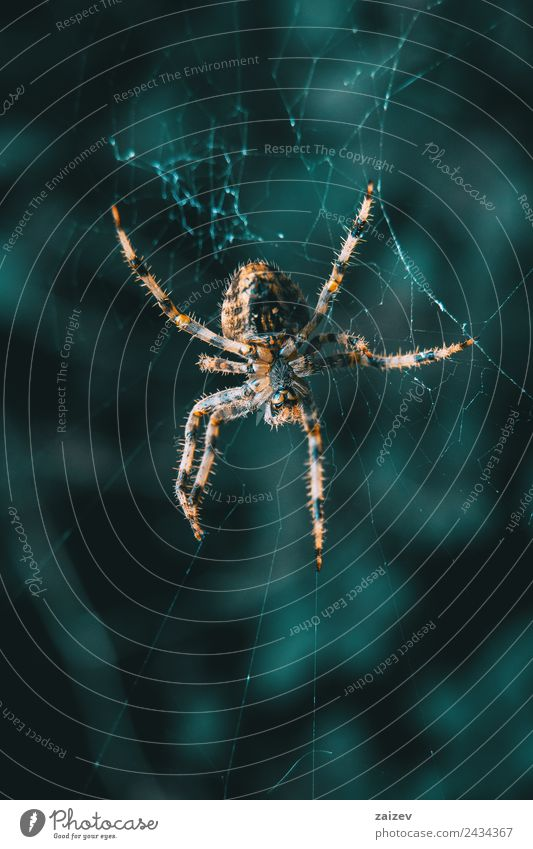 Closeup of a spider in its web Garden Internet Nature Animal Park Forest Virgin forest Wild animal Spider Exceptional Cool (slang) Dark Simple Exotic Creepy