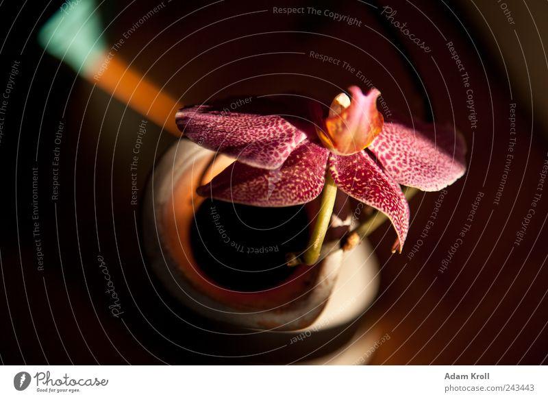 Archibald Nature Flower Orchid Flower vase Esthetic Elegant Exotic Natural Positive Happiness Romance Peace Hope Joie de vivre (Vitality) Colour photo