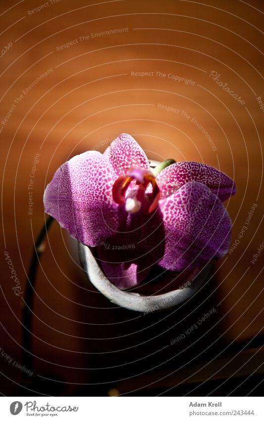Archibald 2 Nature Plant Flower Orchid Flower vase Living or residing Esthetic Elegant Exotic Happiness Beautiful Natural Positive Happy Design Hope