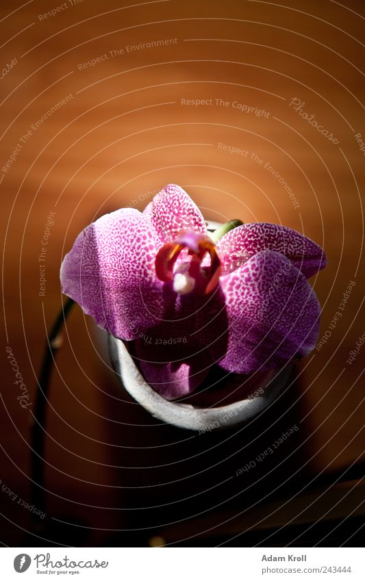 Nature Beautiful Plant Flower Happy Elegant Design Esthetic Happiness Natural Living or residing Hope Positive Exotic Orchid