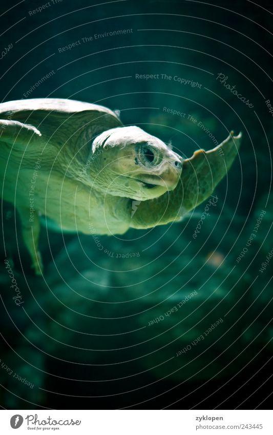 Nature Water Green Animal Swimming & Bathing Zoo Salutation Hello Fin Turtle