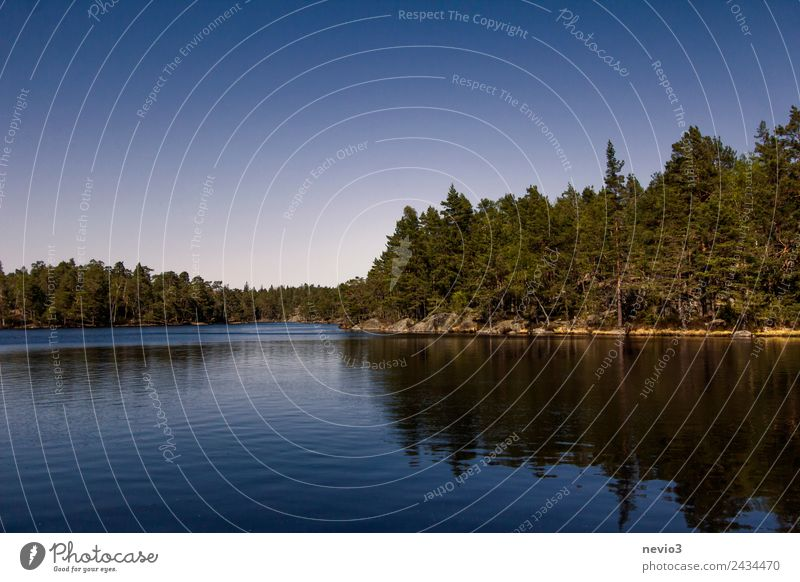 Wooded lakeshore in the south of Sweden Environment Nature Landscape Water Cloudless sky Spring Summer Tree Forest Coast Lakeside Bay Island Swimming & Bathing
