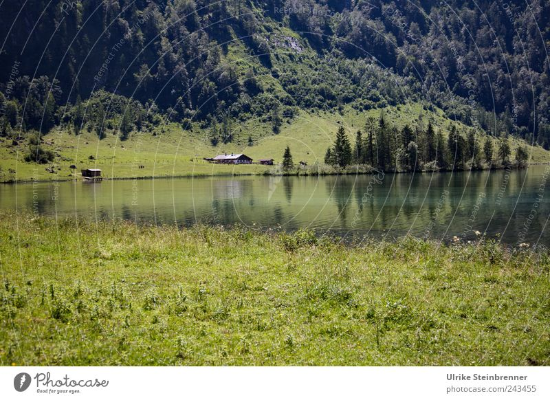 Nature Green Beautiful Tree Plant Vacation & Travel Summer House (Residential Structure) Forest Meadow Mountain Landscape Grass Lake Field Trip