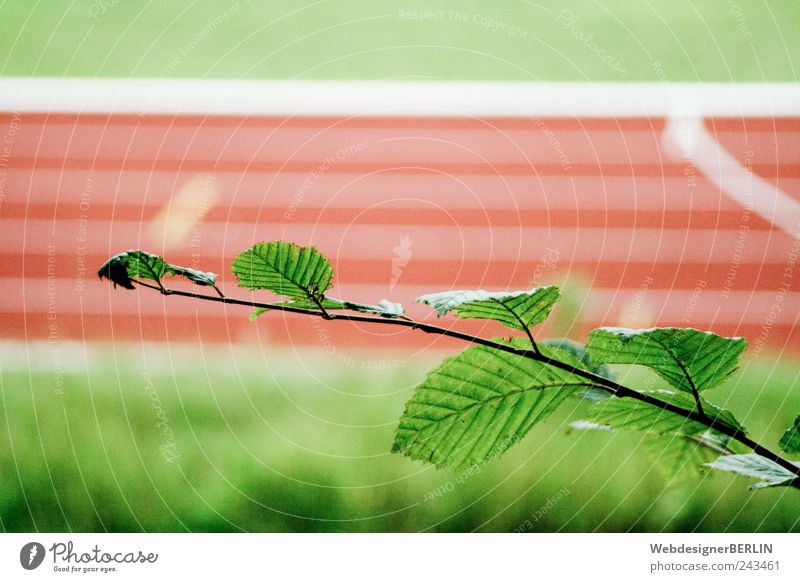 the leafy branch in front of the sports track Red Racecourse Sporting Complex Running sports Running track Branch Foot race Leaf Colour photo Copy Space top