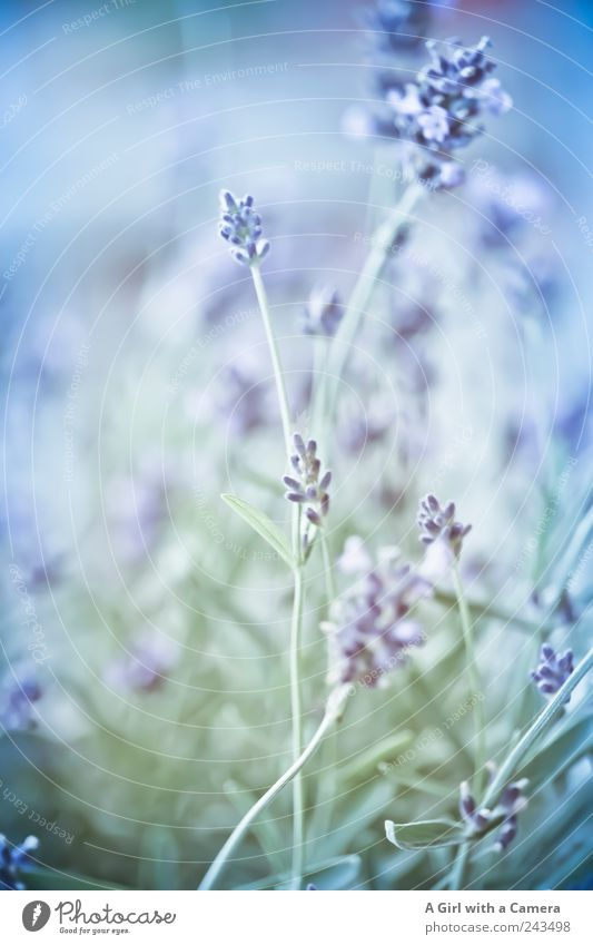 Nature Blue Beautiful Plant Summer Flower Meadow Garden Bright Elegant Wild Natural Fresh Esthetic Growth Decoration