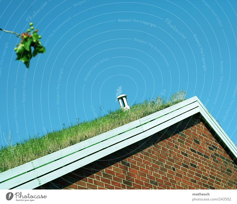 do you hear the grass grow? Sky Cloudless sky Grass House (Residential Structure) Architecture Wall (barrier) Wall (building) Roof Eaves Chimney Blue Brown