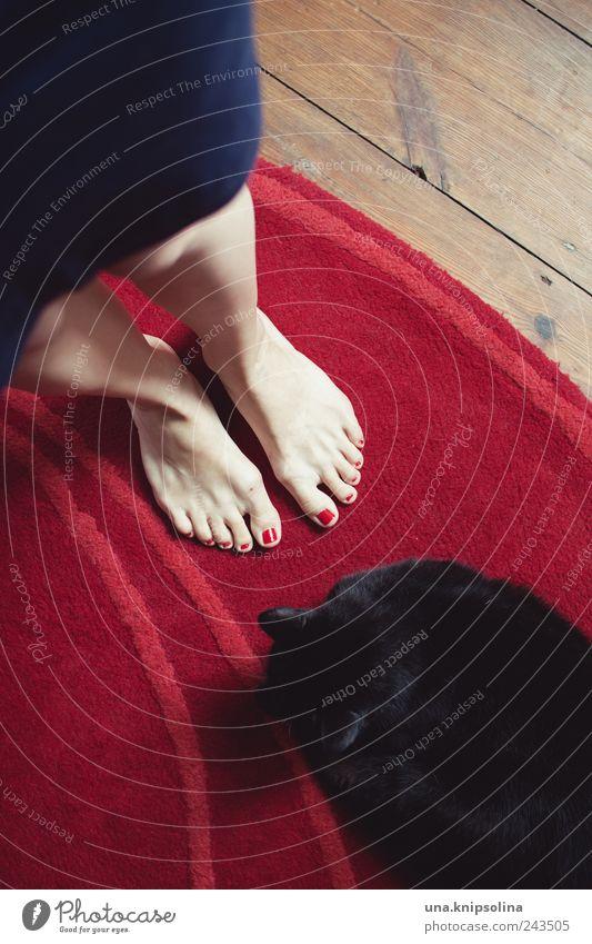good.bye Nail polish Living or residing Flat (apartment) Carpet Floorboards Wood Feminine Woman Adults Legs Feet 1 Human being Skirt Animal Pet Cat Observe Lie