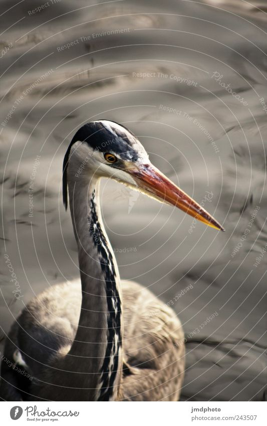Nature Water Calm Animal Meadow Park Landscape Contentment Bird Coast Waves Environment Wet Free Feather Wing
