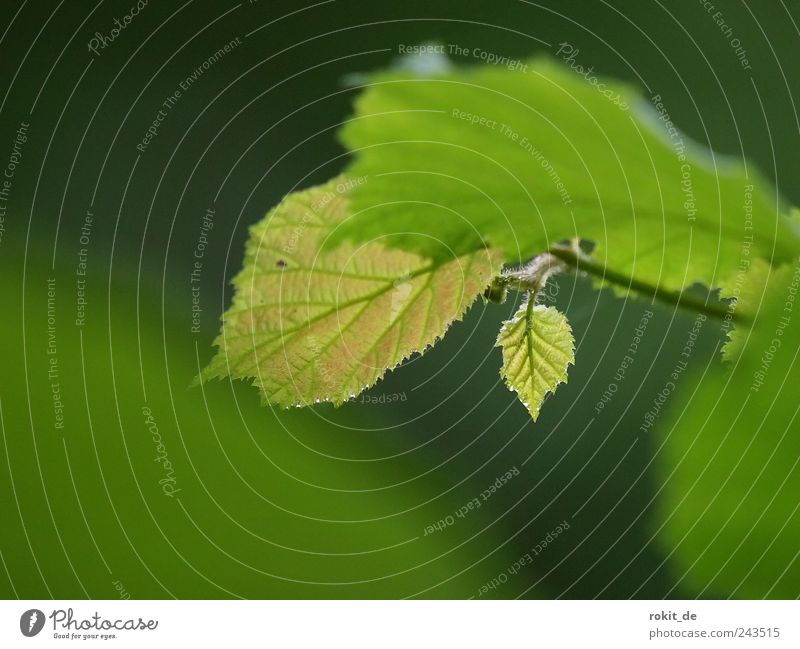 Green Tree Plant Leaf Loneliness Small Park Fresh Determination Spring fever Hazelnut leaf