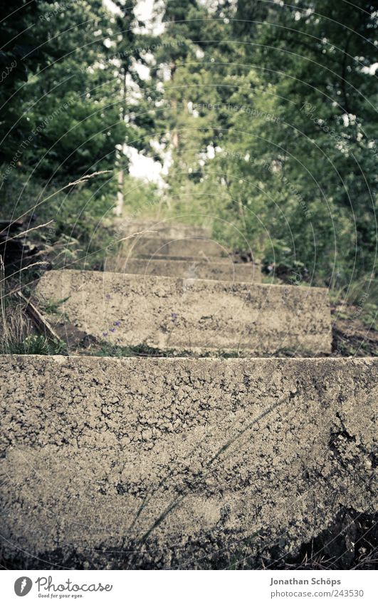 Nature Green Forest Above Environment Grass Lanes & trails Park Brown Concrete Hiking Stairs Under Hard Go up Deception