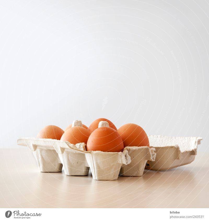 I have eggs Egg Breakfast Picnic Brown White Egg seller Packing material 6 Table Interior shot Copy Space top Deep depth of field