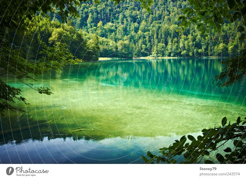 mountain lake Nature Landscape Water Summer Beautiful weather Tree Forest Lakeside Clean Green Calm Purity Loneliness Relaxation Mountain lake clear Log