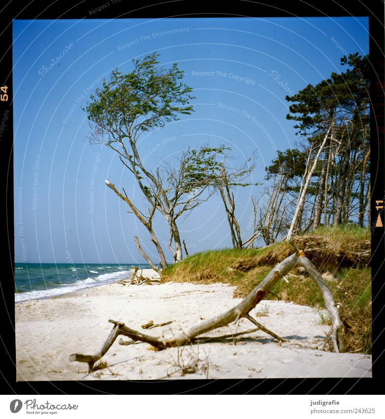 western beach Environment Nature Landscape Plant Water Sky Cloudless sky Summer Climate Beautiful weather Tree Grass Coast Beach Baltic Sea Ocean Darss