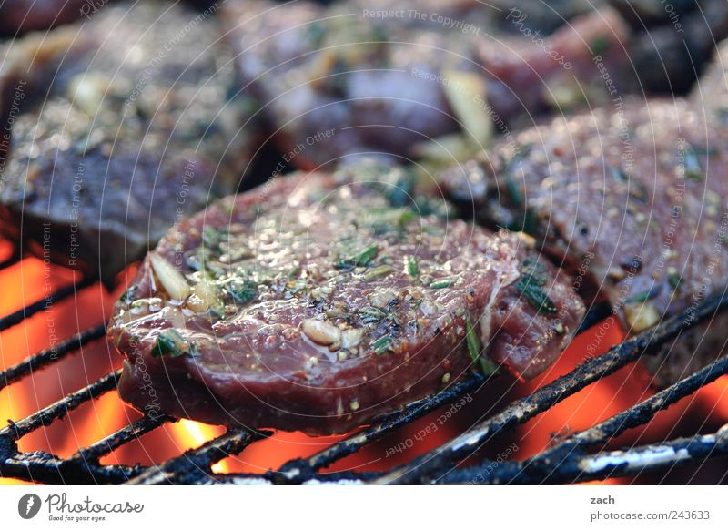 Summer - Final spurt Food Meat Herbs and spices Pork Beef Steak Escalope Nutrition Dinner Barbecue (event) Grill BBQ season Barbecue (apparatus) To enjoy