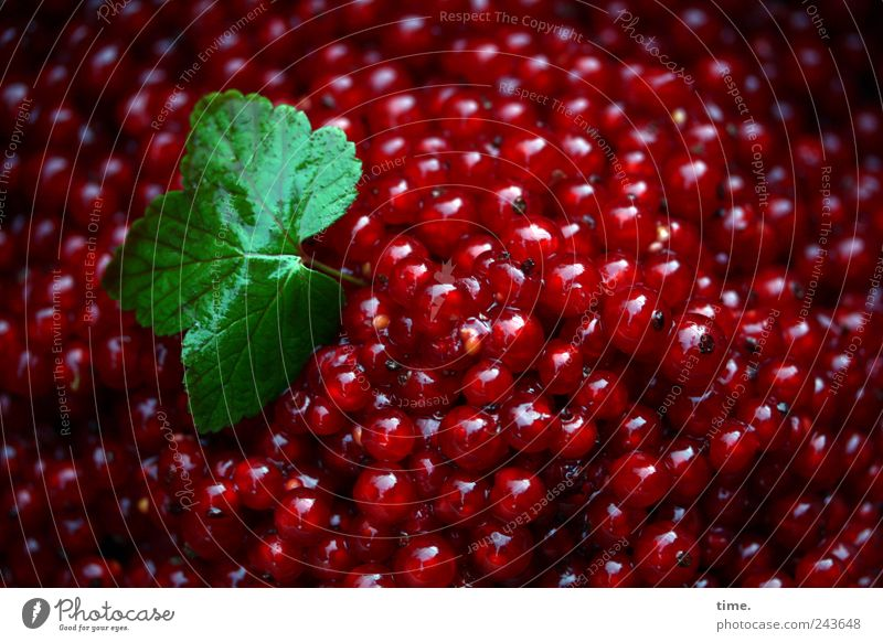 Nature Green Red Leaf Nutrition Food Fruit Fresh Arrangement Round Natural Delicious Many Mixture Organic produce Berries