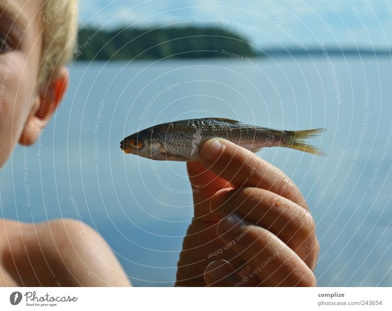 Child Nature Water Vacation & Travel Hand Summer Ocean Beach Animal Death Small Head Lake Swimming & Bathing Infancy Skin