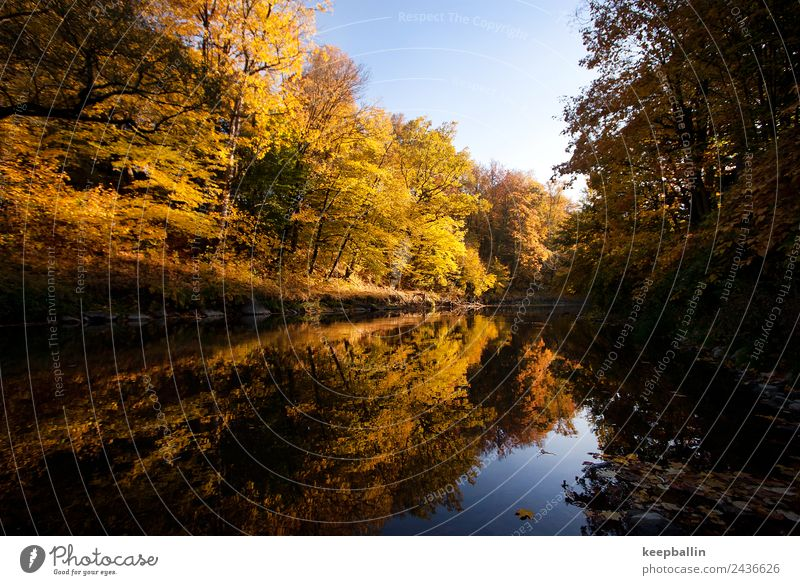 Nature Vacation & Travel Water Calm Forest Environment Autumn Tourism Freedom Adventure Warm-heartedness River Longing River bank Sustainability Camping