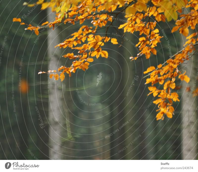 Nature Plant Tree Calm Leaf Forest Sadness Autumn Brown Orange Transience Seasons Twig Autumn leaves Autumnal November