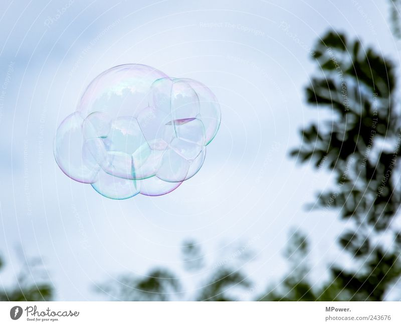Sky Tree Clouds Flying Round Soap bubble Air bubble UFO Connectedness