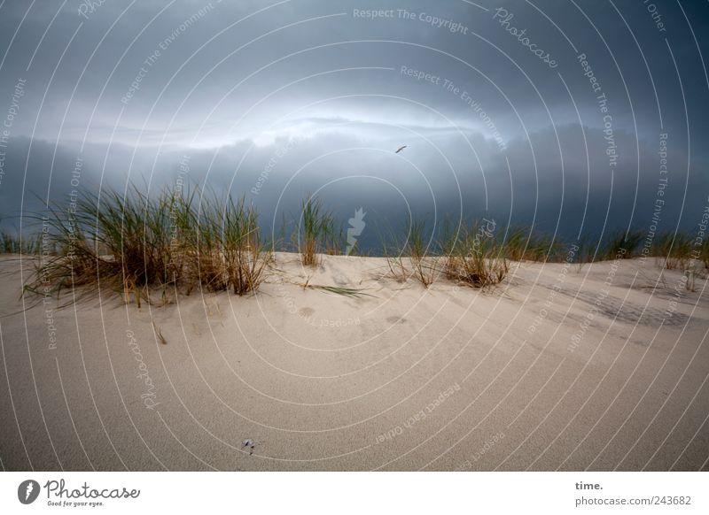 Sky Nature Clouds Dark Landscape Environment Grass Sand Coast Weather Energy Threat Beach dune Dune Whimsical Bizarre