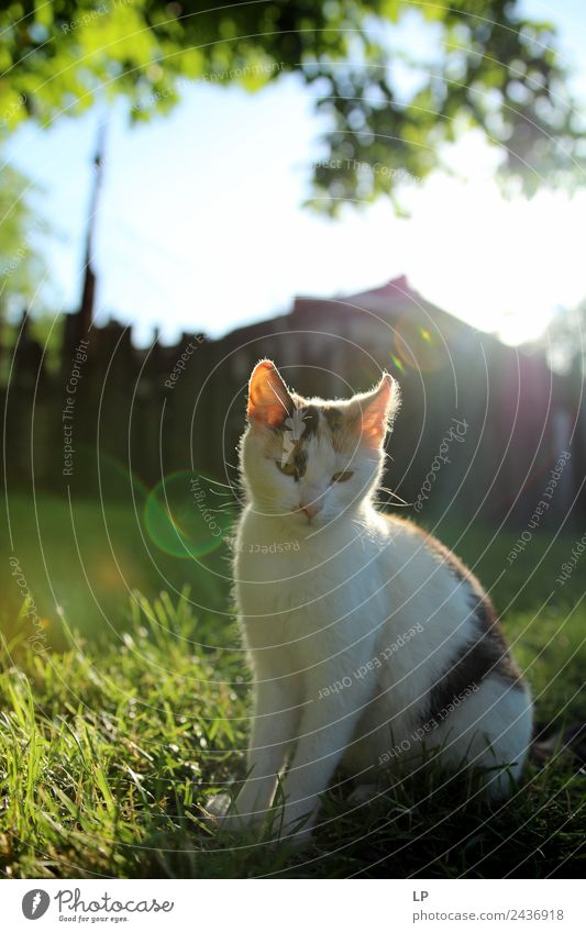 cat and light Animal Pet Cat Emotions Moody Contentment Self-confident Acceptance Trust Obedient Peaceful Goodness Caution Serene Patient Calm Self Control