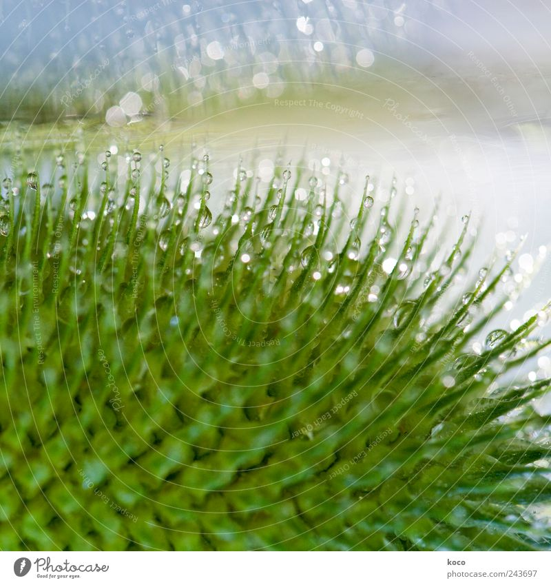 What the rain gives us Beautiful Hair and hairstyles Life Harmonious Well-being Senses Nature Water Drops of water Sunlight Spring Summer Rain Plant Leaf
