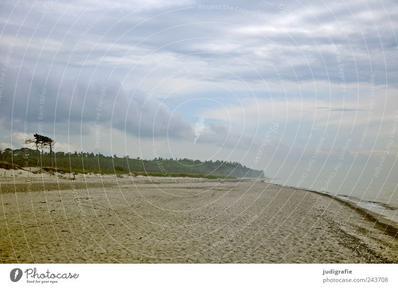 western beach Environment Nature Landscape Plant Water Sky Clouds Climate Coast Beach Baltic Sea Ocean Darss Western Beach Far-off places Cold Wild Moody