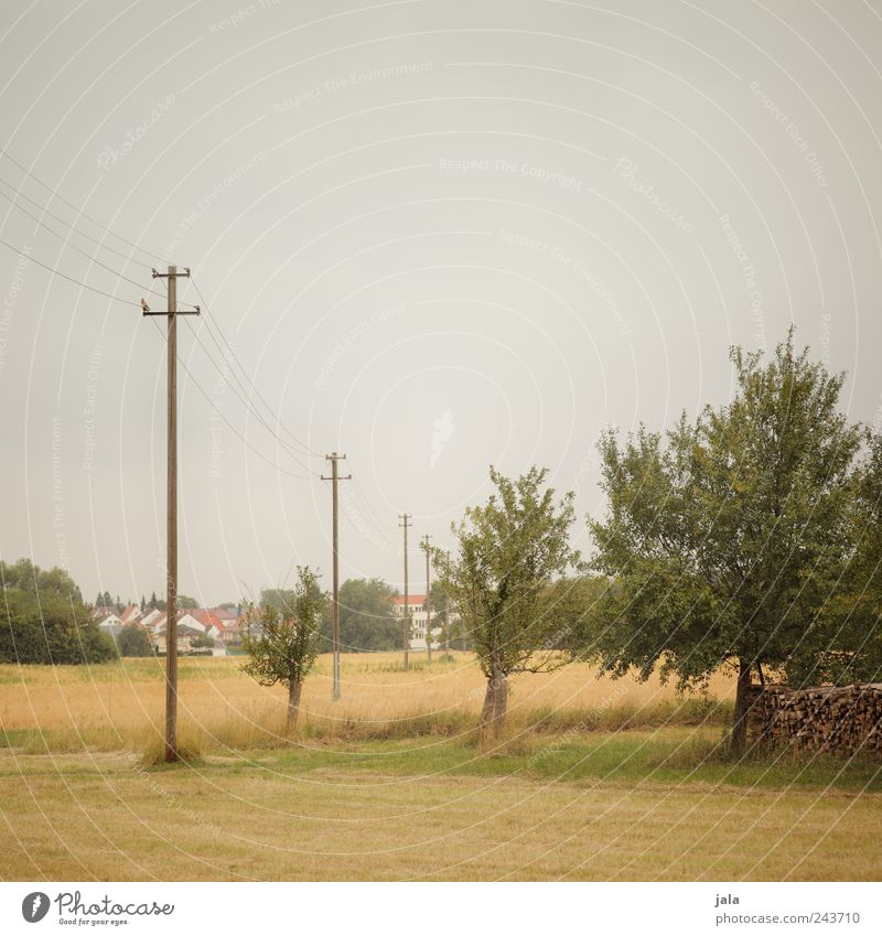 out of town Environment Nature Landscape Sky Summer Plant Tree Grass Bushes Foliage plant Agricultural crop Wild plant Meadow Field Small Town Electricity pylon