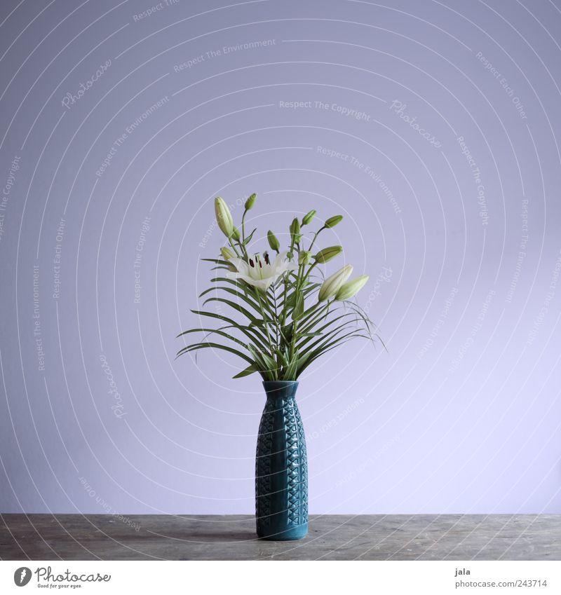 White Flower Green Blue Plant Leaf Blossom Wood Esthetic Violet Bouquet Vase Lily Flower vase
