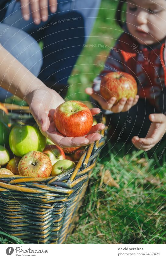 Woman and girl holding organic apples in hands Human being Nature Beautiful Green Hand Red Joy Adults Lifestyle Autumn Natural Happy Small Garden