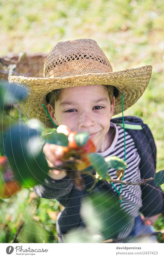 Happy kid with hat picking apples from tree Fruit Apple Lifestyle Joy Leisure and hobbies Garden Child Human being Boy (child) Man Adults Hand Nature Autumn