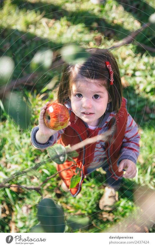 Little girl holding organic apple in her hand Woman Child Human being Nature Green Hand Tree Red Joy Adults Lifestyle Autumn Natural Family & Relations Happy