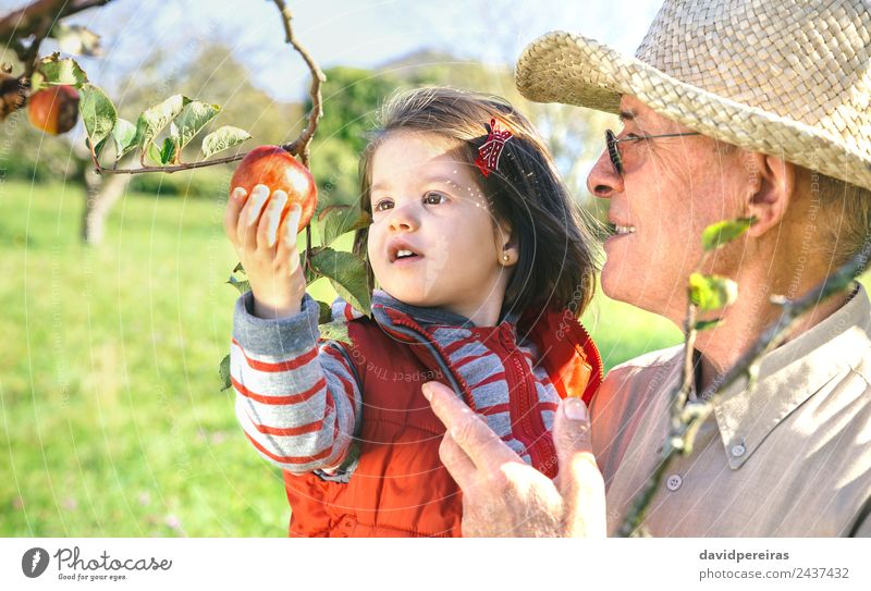 Senior man holding adorable little girl picking apples Fruit Apple Lifestyle Happy Leisure and hobbies Garden Child Human being Baby Woman Adults Man