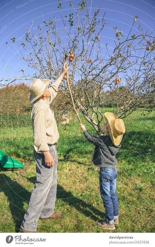 Senior man and kid picking apples with wood stick Child Human being Nature Man Green Hand Tree Red Joy Adults Lifestyle Autumn Family & Relations Boy (child)