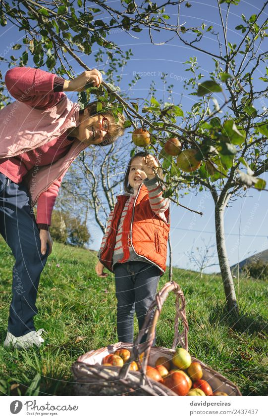 Senior woman and little girl picking apples from tree Fruit Apple Lifestyle Joy Happy Leisure and hobbies Garden Child Human being Baby Woman Adults Grandfather