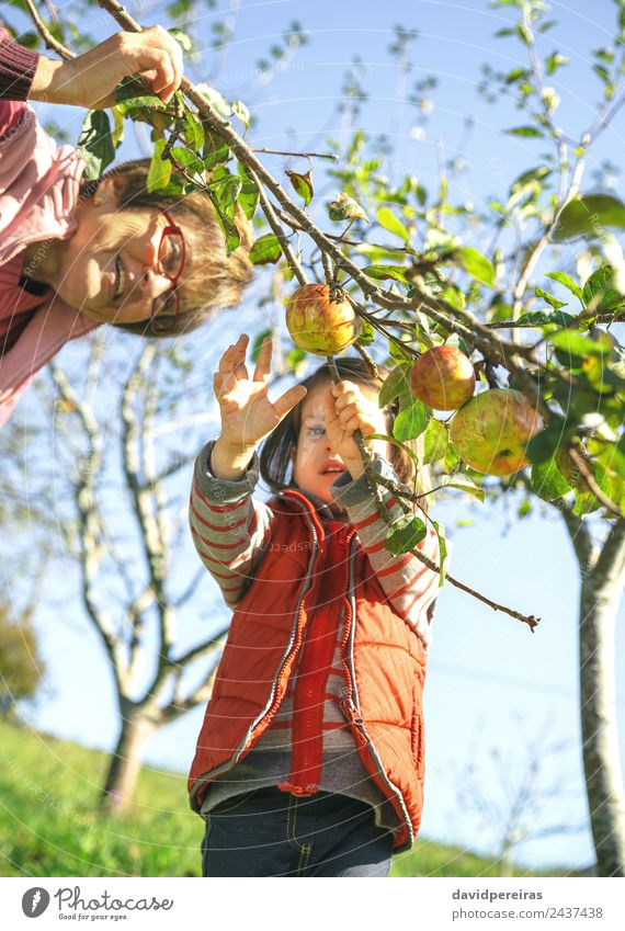 Little girl picking apples with senior woman Fruit Apple Lifestyle Joy Happy Leisure and hobbies Garden Child Human being Baby Woman Adults Grandfather