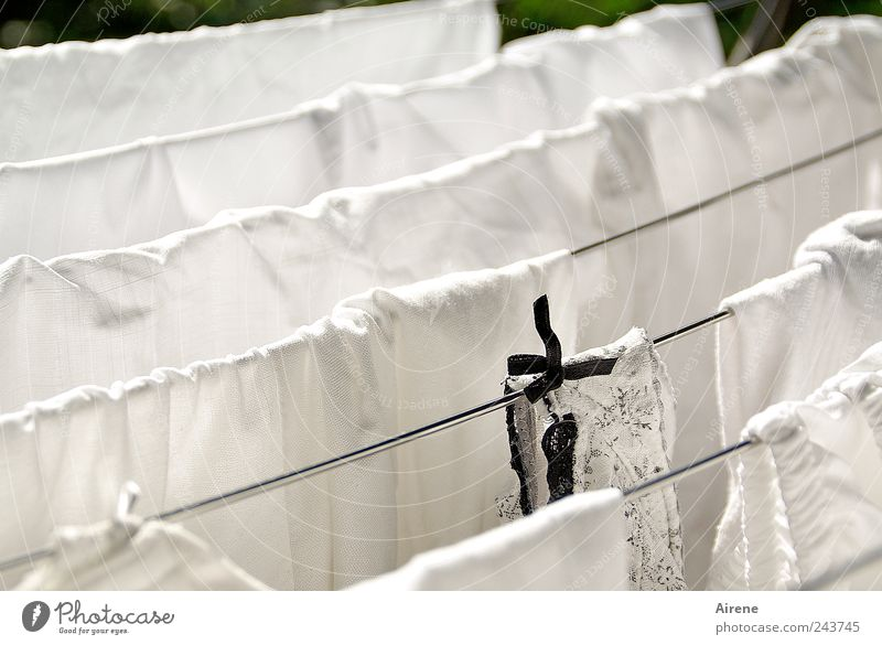 White Black Line Metal Wet Clothing Clean Pure Living or residing Dry Hang Underwear Washing Laundry Bow