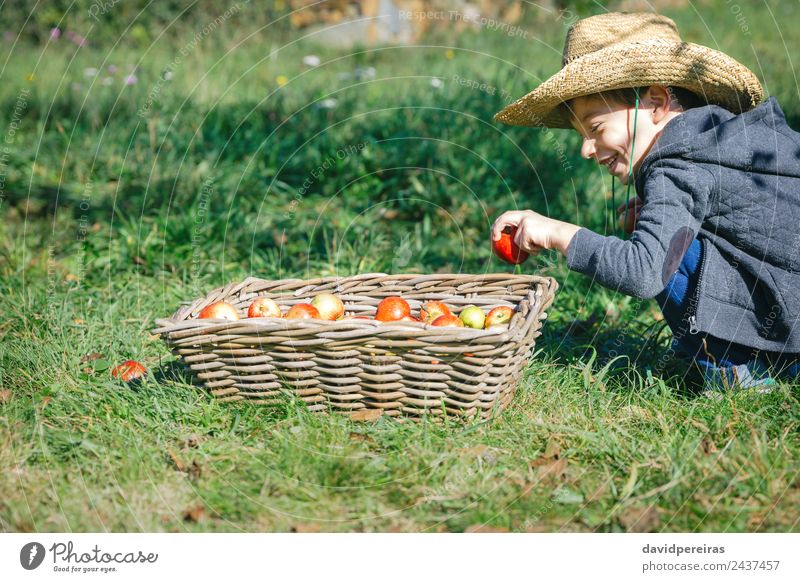 Happy kid putting apple in wicker basket with harvest Fruit Apple Lifestyle Joy Leisure and hobbies Garden Child Human being Boy (child) Man Adults Hand Nature