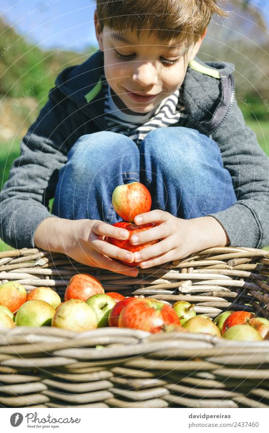 Happy kid playing with apples over wicker basket Child Human being Nature Man Green Hand Tree Red Joy Adults Lifestyle Autumn Boy (child) Small Playing