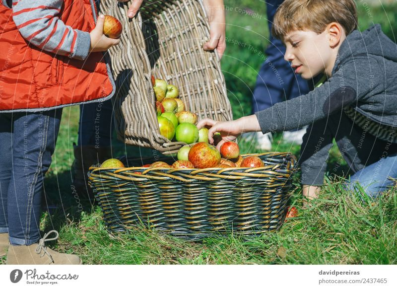 Children putting apples inside of basket with fruit Woman Human being Nature Man Green Hand Tree Red Joy Adults Lifestyle Autumn Natural Family & Relations
