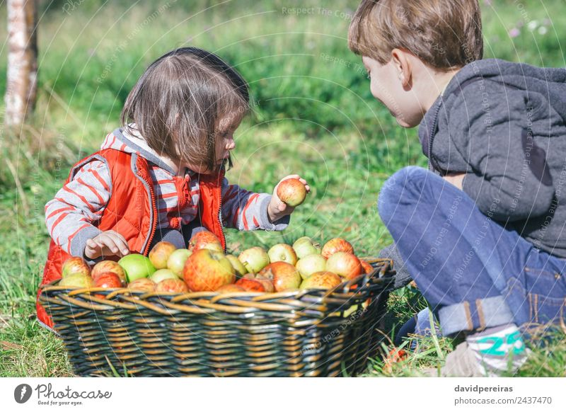 Children holding organic apple from basket with fruit Fruit Apple Lifestyle Joy Happy Leisure and hobbies Garden Human being Boy (child) Woman Adults Man