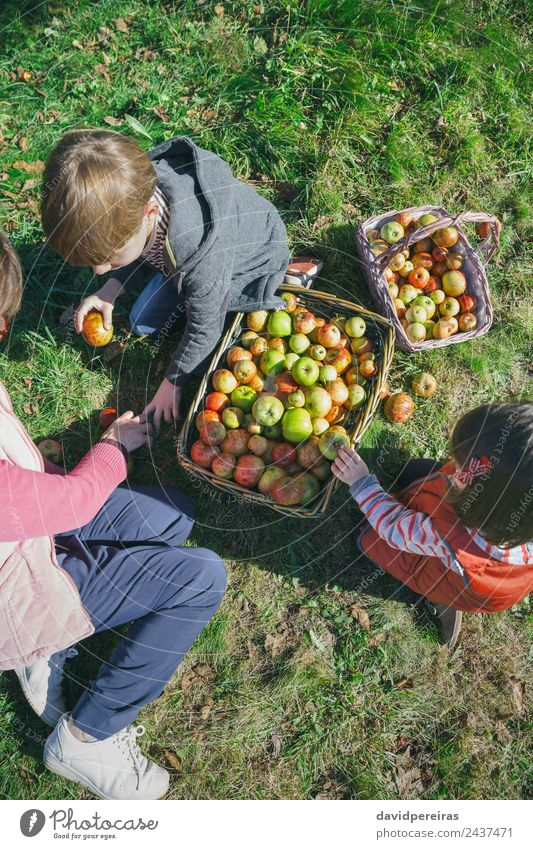 Children and senior woman putting apples inside of baskets Fruit Apple Lifestyle Joy Happy Leisure and hobbies Garden Human being Boy (child) Woman Adults Man