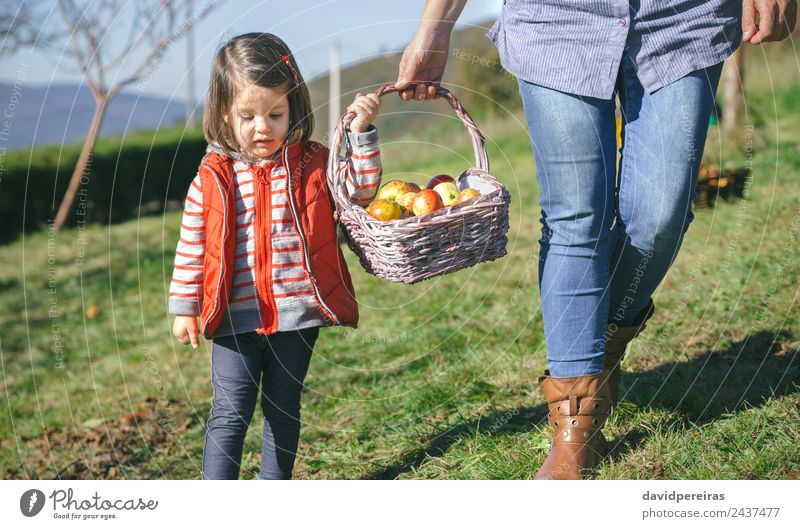 Little girl woman carrying wicker basket with fresh organic apples Fruit Apple Lifestyle Joy Happy Beautiful Leisure and hobbies Garden Human being Woman Adults