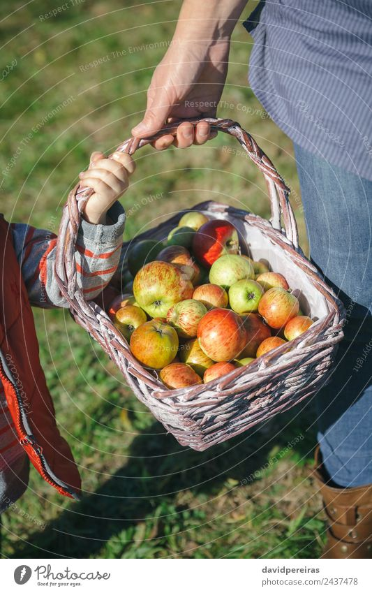 Woman and little girl holding basket with apples Fruit Apple Lifestyle Joy Happy Beautiful Leisure and hobbies Garden Human being Adults Hand Nature Autumn