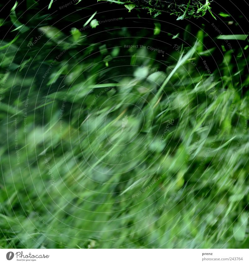 grass Plant Grass Park Meadow Fresh Juicy Green Leaf Blade of grass Floating Line Part Colour photo Exterior shot Deserted Day Motion blur